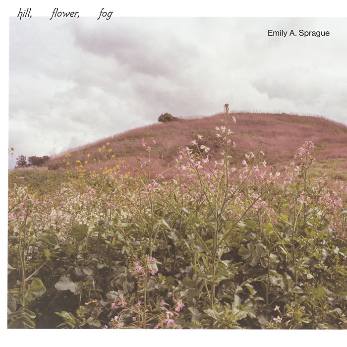 Hill, Flower, Fog - Emily A. Sprague